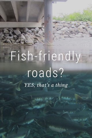 Fish-friendly roads? YES, that's a thing