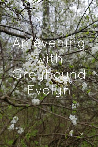An evening with Greyhound Evelyn