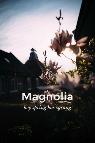 Magnolia hey spring has sprung