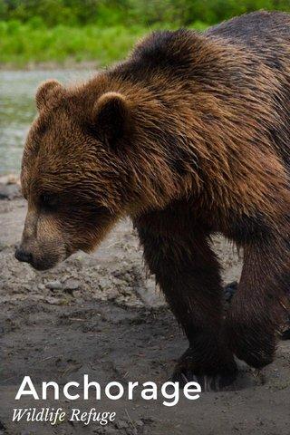 Anchorage Wildlife Refuge