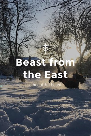 Beast from the East a beautiful beast