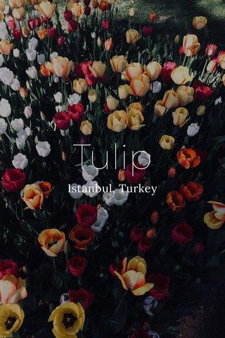 Tulip Istanbul, Turkey