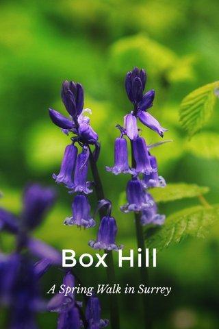 Box Hill A Spring Walk in Surrey