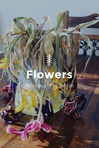 Flowers Photography by Safirah