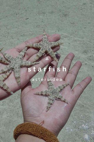 starfish asteroidea