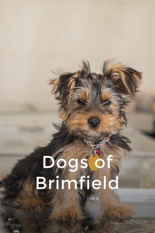 Dogs of Brimfield