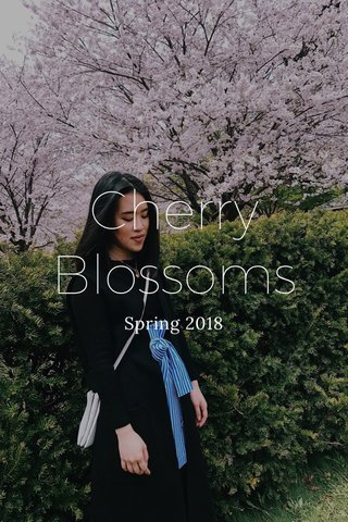 Cherry Blossoms Spring 2018