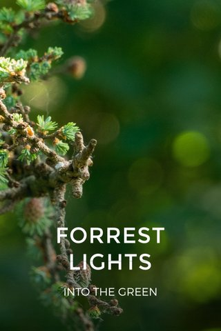 FORREST LIGHTS INTO THE GREEN
