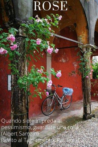 ROSE Quando siete in preda al pessimismo, guardate una rosa. (Albert Samain) (S.Vito al Tagliamento, Pal. Rota)