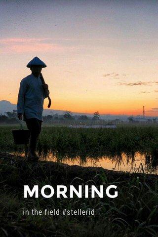 MORNING in the field #stellerid