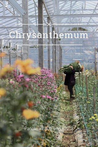 Chrysanthemum Pancasari, Buleleng / 2018