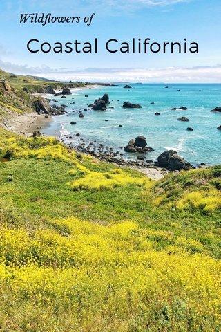Coastal California Wildflowers of