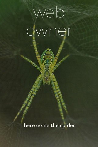 web owner here come the spider