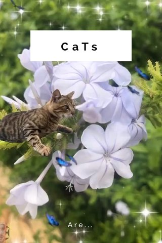 CaTs Are...