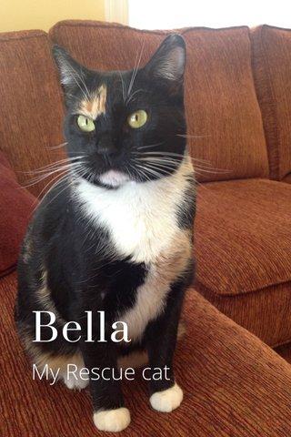 Bella My Rescue cat