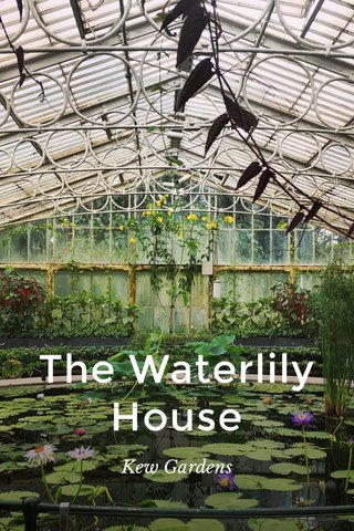 The Waterlily House Kew Gardens