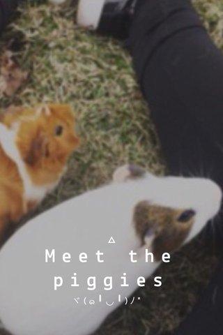 """Meet the piggies ヾ(๑╹◡╹)ノ"""""""