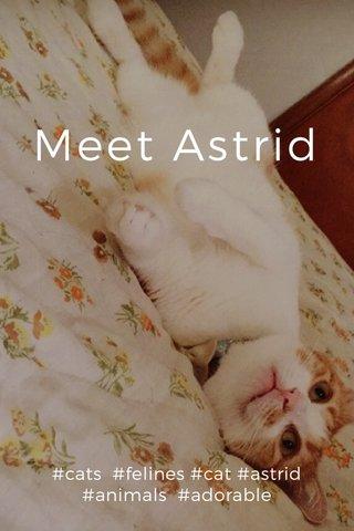 Meet Astrid #cats #felines #cat #astrid #animals #adorable