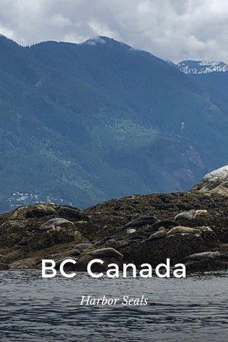 BC Canada Harbor Seals