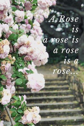A Rose is a rose is a rose is a rose...