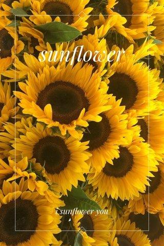 sunflower i sunflower you