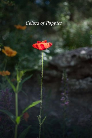 Colors of Poppies