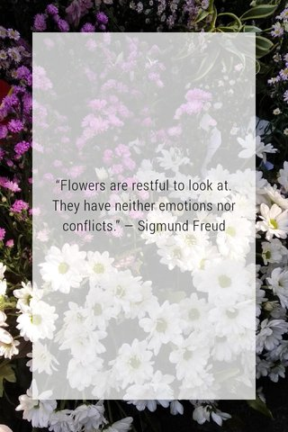 """""""Flowers are restful to look at. They have neither emotions nor conflicts."""" — Sigmund Freud"""