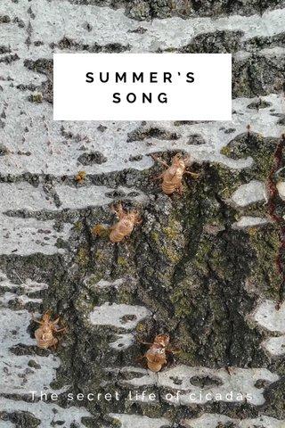 SUMMER'S SONG The secret life of cicadas