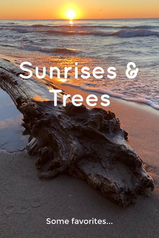 Sunrises & Trees Some favorites...