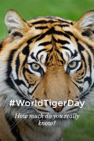 #WorldTigerDay How much do you really know?