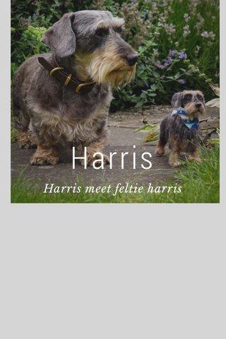 Harris Harris meet feltie harris