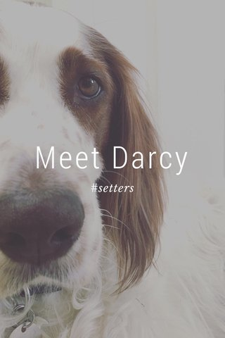 Meet Darcy #setters