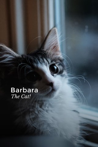 Barbara The Cat!