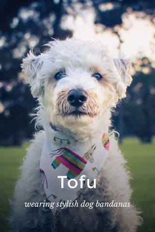Tofu wearing stylish dog bandanas