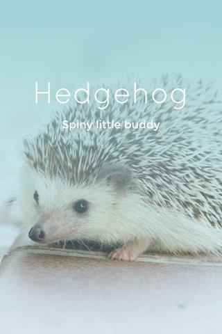 Hedgehog Spiny little buddy