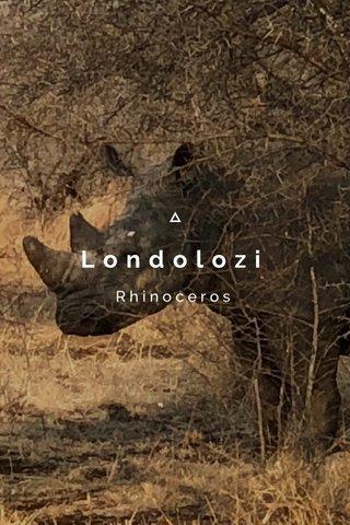 Londolozi Rhinoceros
