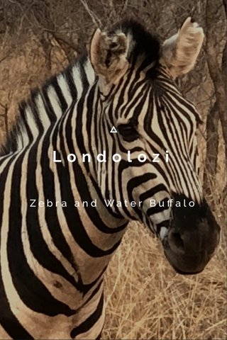 Londolozi Zebra and Water Buffalo