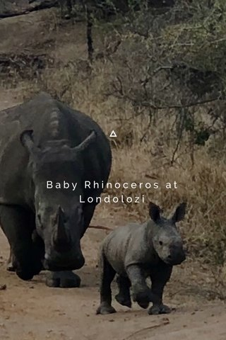 Baby Rhinoceros at Londolozi