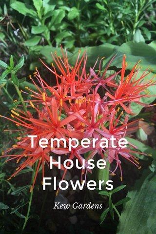 Temperate House Flowers Kew Gardens