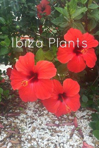 Ibiza Plants Ibiza