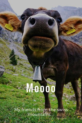 Moooo My friends from the swiss mountains....
