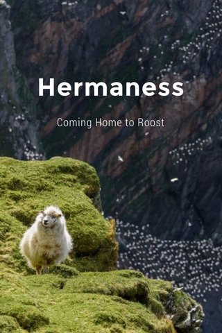 Hermaness Coming Home to Roost