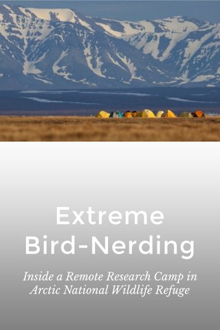 Extreme Bird-Nerding Inside a Remote Research Camp in Arctic National Wildlife Refuge