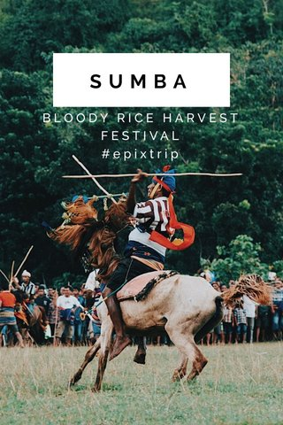SUMBA BLOODY RICE HARVEST FESTIVAL #epixtrip