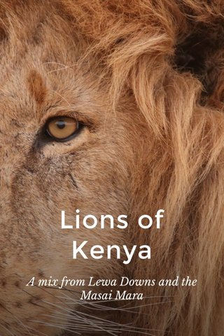 Lions of Kenya A mix from Lewa Downs and the Masai Mara