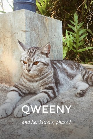 QWEENY and her kittens, phase I
