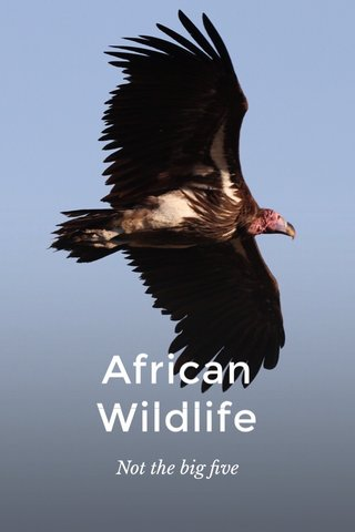 African Wildlife Not the big five