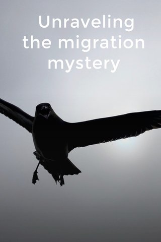 Unraveling the migration mystery