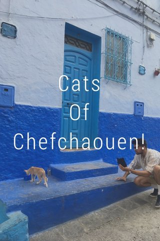Cats Of Chefchaouen!