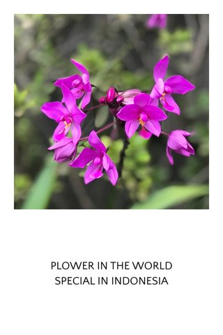 PLOWER IN THE WORLD SPECIAL IN INDONESIA